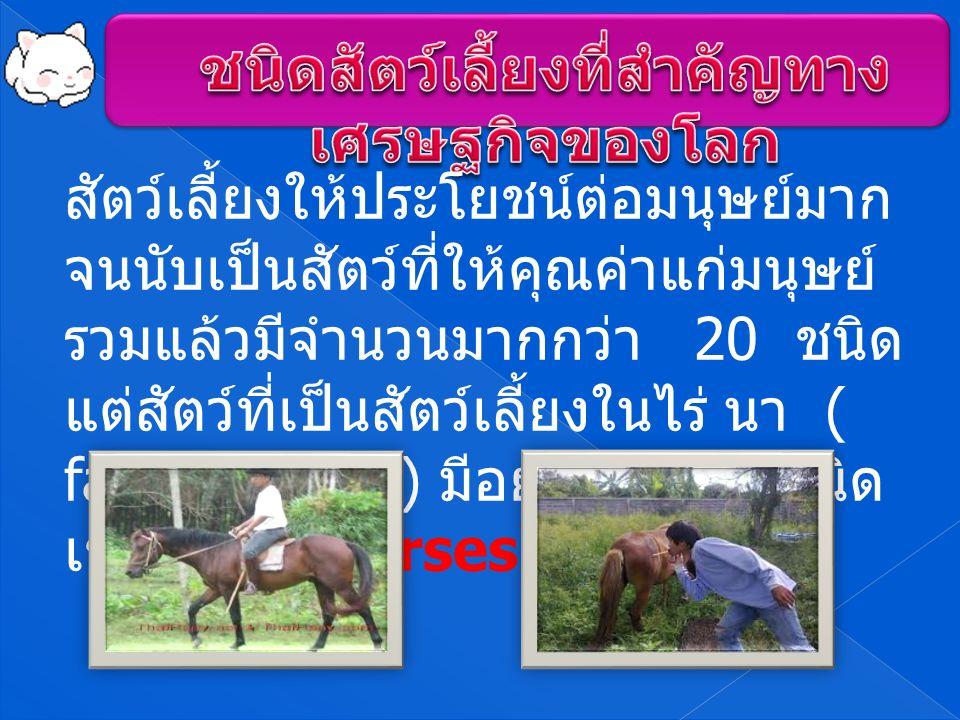 สัตว์เลี้ยงให้ประโยชน์ต่อมนุษย์มาก จนนับเป็นสัตว์ที่ให้คุณค่าแก่มนุษย์ รวมแล้วมีจํานวนมากกว่า 20 ชนิด แต่สัตว์ที่เป็นสัตว์เลี้ยงในไร่ นา ( farm animals) มีอยู่ 12 – 13 ชนิด เช่น ม้า ( horses)