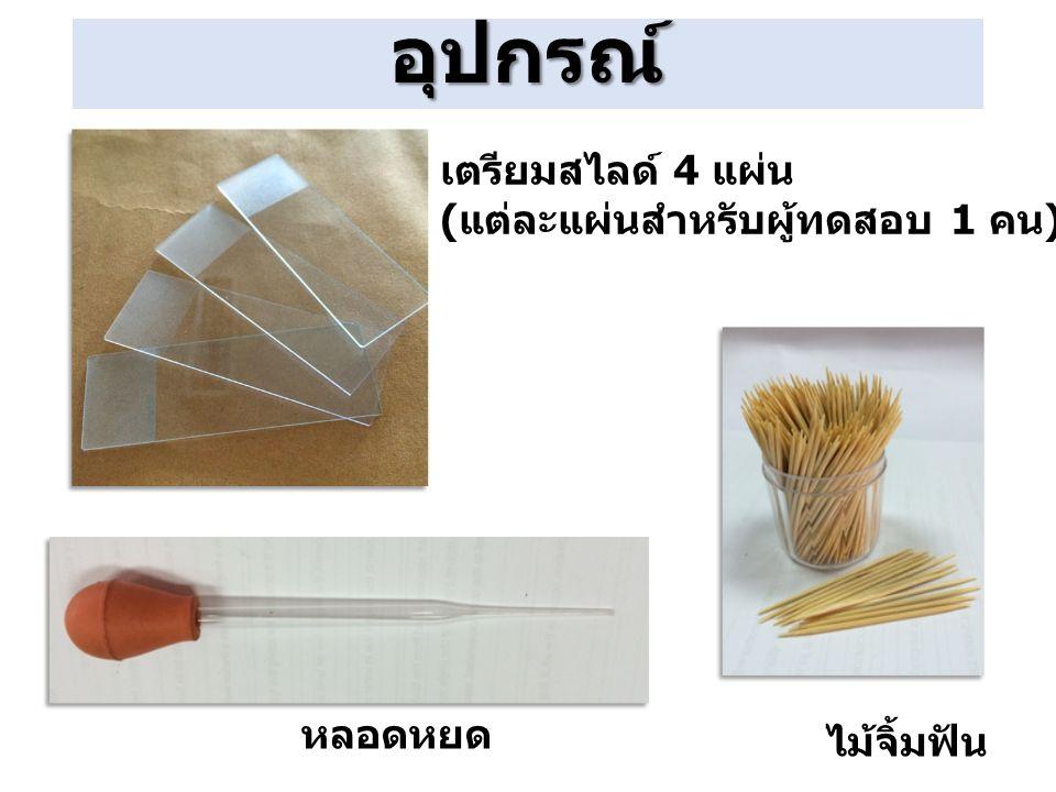 หลอดหยด เตรียมสไลด์ 4 แผ่น ( แต่ละแผ่นสำหรับผู้ทดสอบ 1 คน ) ไม้จิ้มฟัน อุปกรณ์