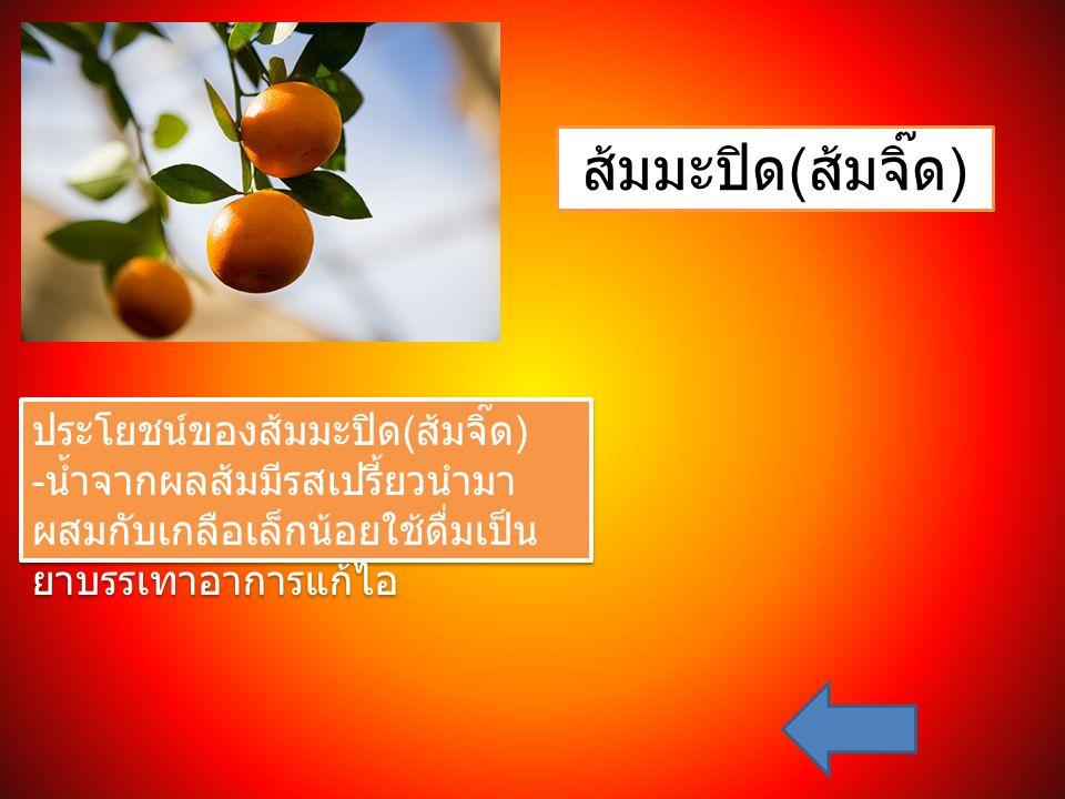 ส้มมะปิด ( ส้มจิ๊ด ) ประโยชน์ของส้มมะปิด ( ส้มจิ๊ด ) - น้ำจากผลส้มมีรสเปรี้ยวนำมา ผสมกับเกลือเล็กน้อยใช้ดื่มเป็น ยาบรรเทาอาการแก้ไอ ประโยชน์ของส้มมะปิ