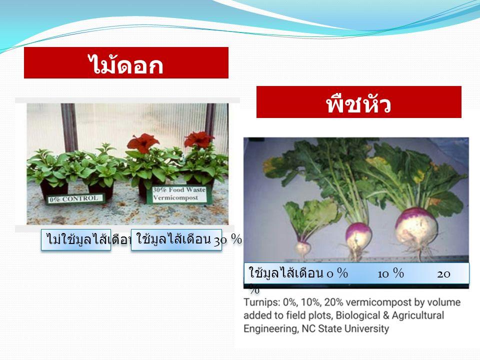 ไม้ดอก พืชหัว ไม่ใช้มูลไส้เดือน ใช้มูลไส้เดือน 30 % ใช้มูลไส้เดือน 0 % 10 % 20 %