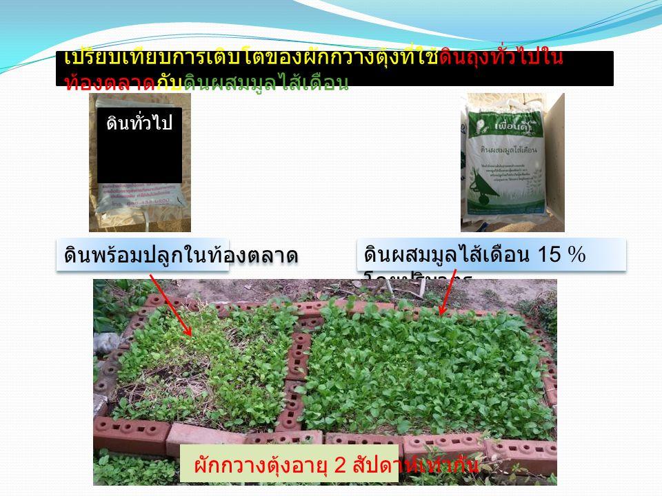 ดินพร้อมปลูกในท้องตลาด ดินผสมมูลไส้เดือน 15 % โดยปริมาตร เปรียบเทียบการเติบโตของผักกวางตุ้งที่ใช้ดินถุงทั่วไปใน ท้องตลาดกับดินผสมมูลไส้เดือน ดินทั่วไป ผักกวางตุ้งอายุ 2 สัปดาห์เท่ากัน