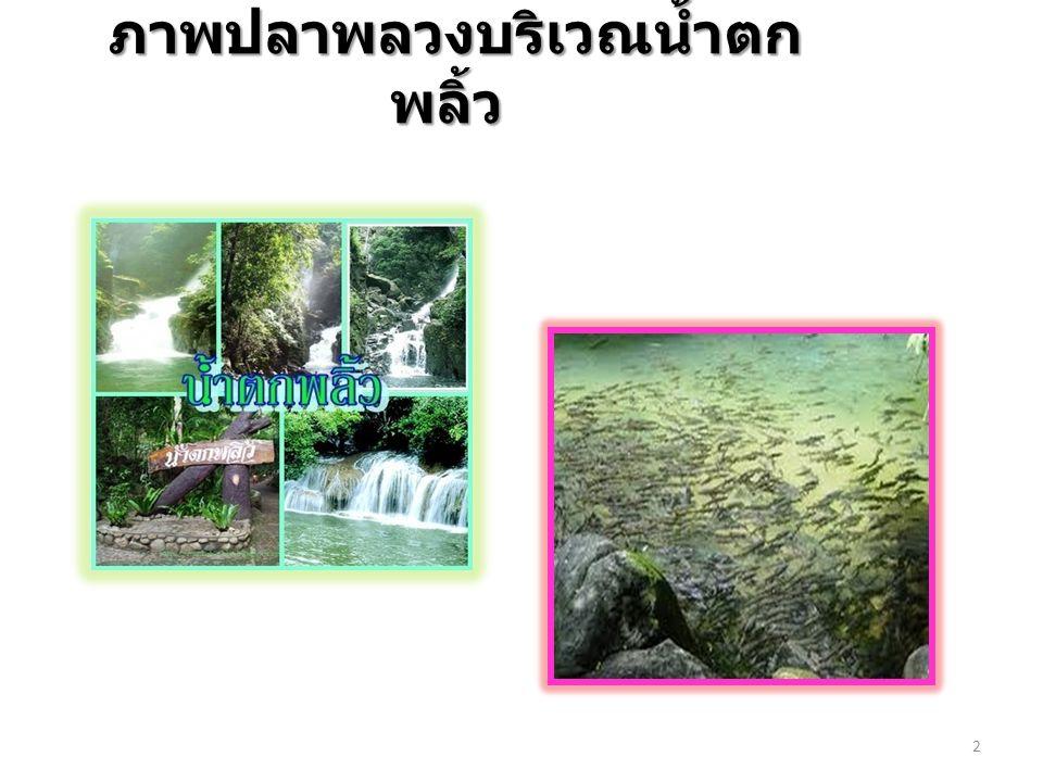 2 ภาพปลาพลวงบริเวณน้ำตก พลิ้ว ภาพปลาพลวงบริเวณน้ำตก พลิ้ว