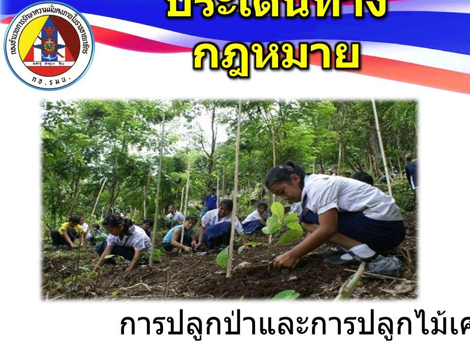 การปลูกป่าและการปลูกไม้เศรษฐกิจ
