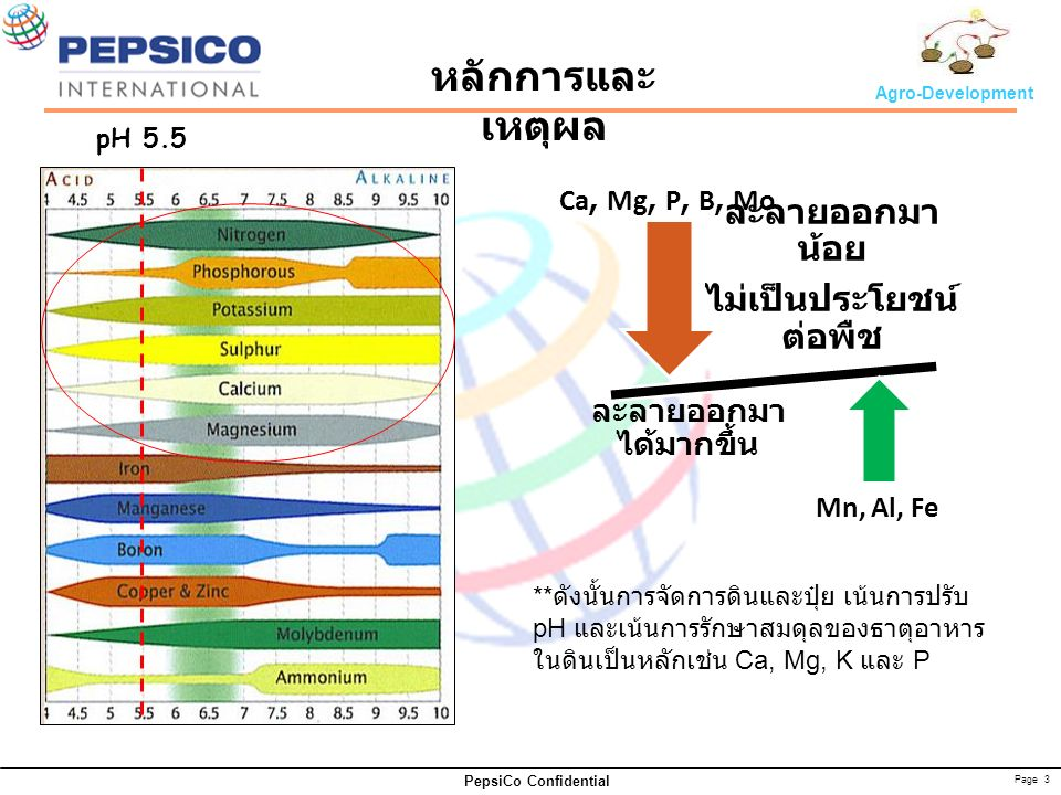 Page 3 PepsiCo Confidential Agro-Development ละลายออกมา น้อย ไม่เป็นประโยชน์ ต่อพืช ละลายออกมา ได้มากขึ้น Mn, Al, Fe Ca, Mg, P, B, Mo pH 5.5 หลักการและ เหตุผล ** ดังนั้นการจัดการดินและปุ๋ย เน้นการปรับ pH และเน้นการรักษาสมดุลของธาตุอาหาร ในดินเป็นหลักเช่น Ca, Mg, K และ P