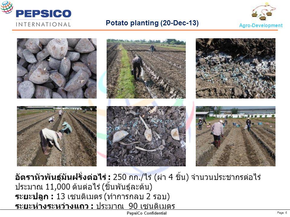 Page 6 PepsiCo Confidential Agro-Development Potato planting (20-Dec-13) อัตราหัวพันธุ์มันฝรั่งต่อไร่ : 250 กก./ ไร่ ( ผ่า 4 ชิ้น ) จำนวนประชากรต่อไร่ ประมาณ 11,000 ต้นต่อไร่ ( ชิ้นพันธุ์ละต้น ) ระยะปลูก : 13 เซนติเมตร ( ทำการกลบ 2 รอบ ) ระยะห่างระหว่างแถว : ประมาณ 90 เซนติเมตร