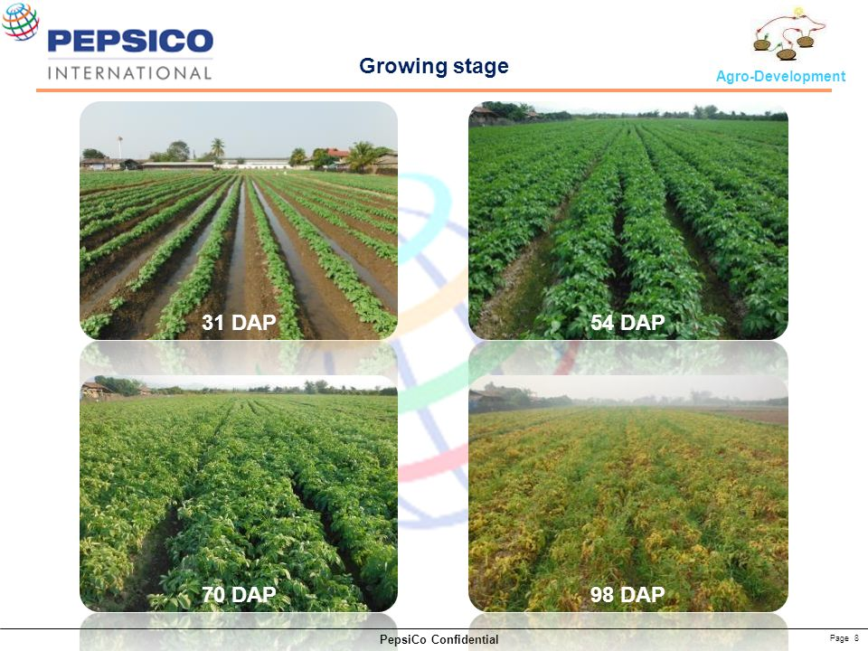 Page 8 PepsiCo Confidential Agro-Development Growing stage 31 DAP54 DAP 70 DAP98 DAP