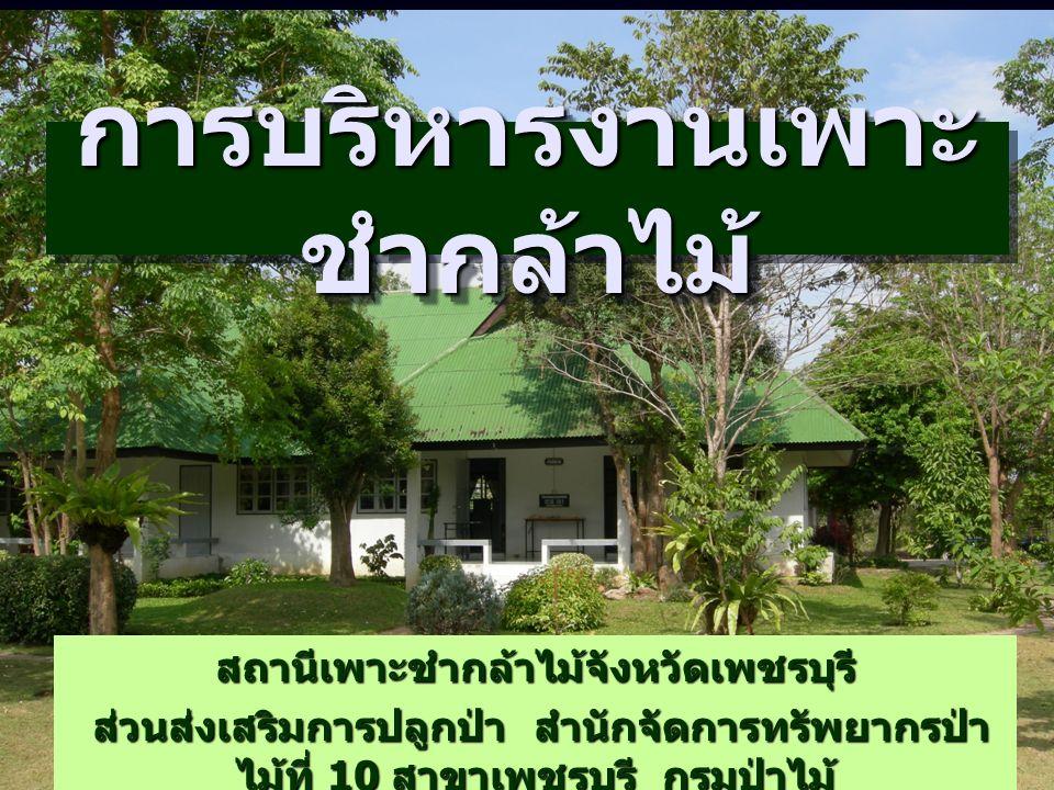 การบริหารงานเพาะ ชำกล้าไม้ สถานีเพาะชำกล้าไม้จังหวัดเพชรบุรี ส่วนส่งเสริมการปลูกป่า สำนักจัดการทรัพยากรป่า ไม้ที่ 10 สาขาเพชรบุรี กรมป่าไม้ ส่วนส่งเสริมการปลูกป่า สำนักจัดการทรัพยากรป่า ไม้ที่ 10 สาขาเพชรบุรี กรมป่าไม้