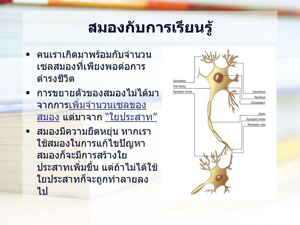 สมองกับการเรียนรู้  คนเราเกิดมาพร้อมกับจำนวน เซลสมองที่เพียงพอต่อการ ดำรงชีวิต  การขยายตัวของสมองไม่ได้มา จากการเพิ่มจำนวนเซลของ สมอง แต่มาจาก ใยประสาท  สมองมีความยืดหยุ่น หากเรา ใช้สมองในการแก้ไขปัญหา สมองก็จะมีการสร้างใย ประสาทเพิ่มขึ้น แต่ถ้าไม่ได้ใช้ ใยประสาทก็จะถูกทำลายลง ไป