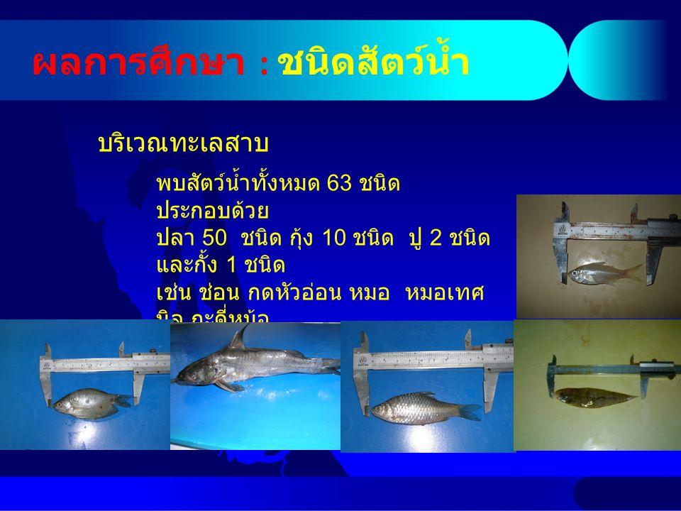 ผลการศึกษา : ชนิดสัตว์น้ำ บริเวณทะเลสาบ พบสัตว์น้ำทั้งหมด 63 ชนิด ประกอบด้วย ปลา 50 ชนิด กุ้ง 10 ชนิด ปู 2 ชนิด และกั้ง 1 ชนิด เช่น ช่อน กดหัวอ่อน หมอ หมอเทศ นิล กะดี่หม้อ ตะเพียนทราย ยอดม่วง แป้นแก้ว กุ้งกะ ต่อม ปูแสม ปูแป้น หอยขม หอยโข่ง