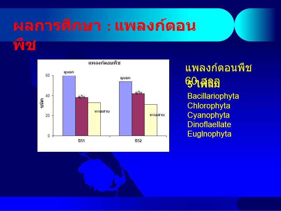 ผลการศึกษา : แพลงก์ตอน พืช 5 ไฟลัม Bacillariophyta Chlorophyta Cyanophyta Dinoflaellate Euglnophyta แพลงก์ตอนพืช 60 สกุล