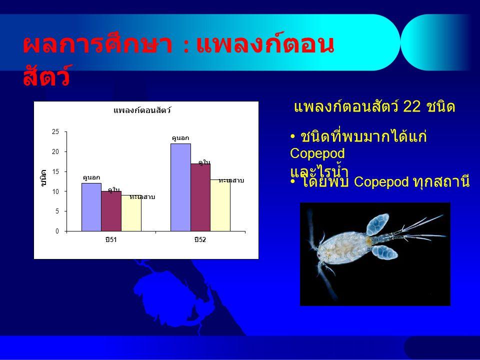 ผลการศึกษา : แพลงก์ตอน สัตว์ ชนิดที่พบมากได้แก่ Copepod และไรน้ำ โดยพบ Copepod ทุกสถานี แพลงก์ตอนสัตว์ 22 ชนิด