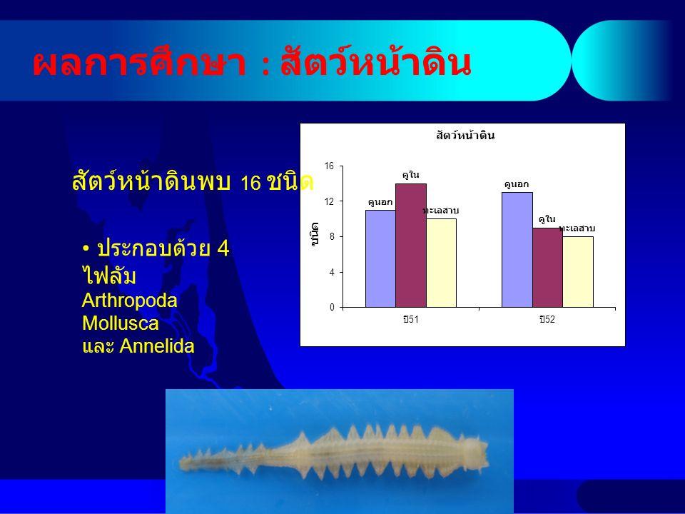 ผลการศึกษา : สัตว์หน้าดิน ประกอบด้วย 4 ไฟลัม Arthropoda Mollusca และ Annelida สัตว์หน้าดินพบ 16 ชนิด