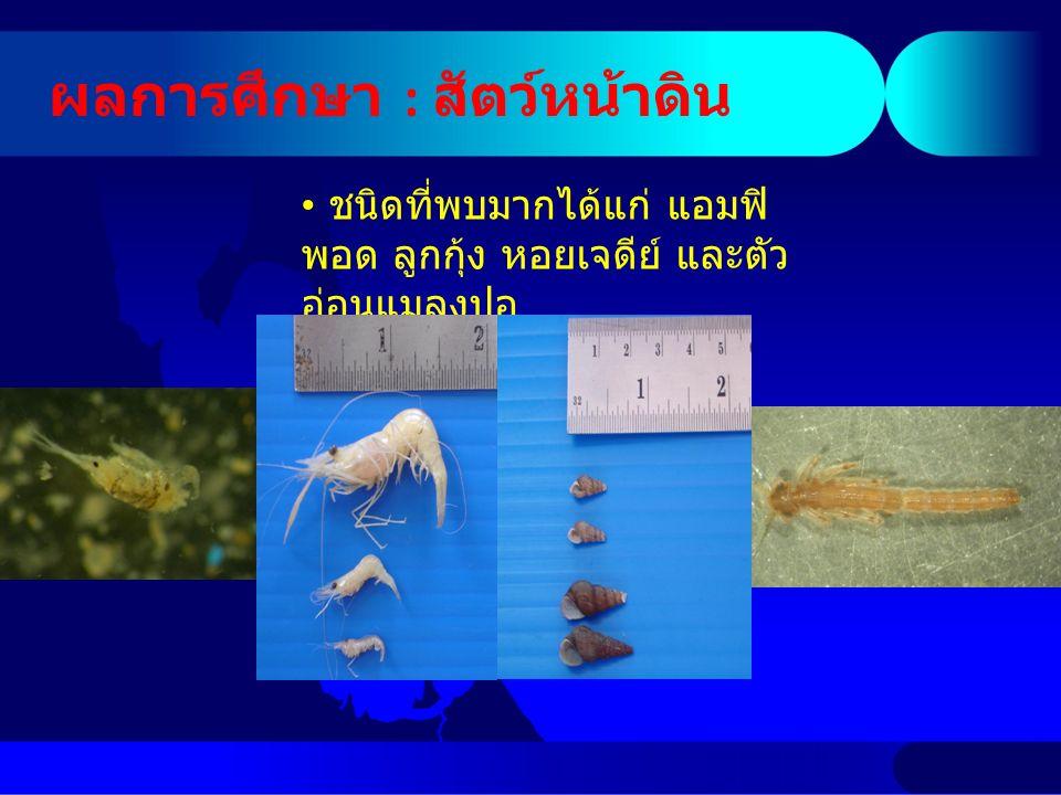 ผลการศึกษา : สัตว์หน้าดิน ชนิดที่พบมากได้แก่ แอมฟิ พอด ลูกกุ้ง หอยเจดีย์ และตัว อ่อนแมลงปอ
