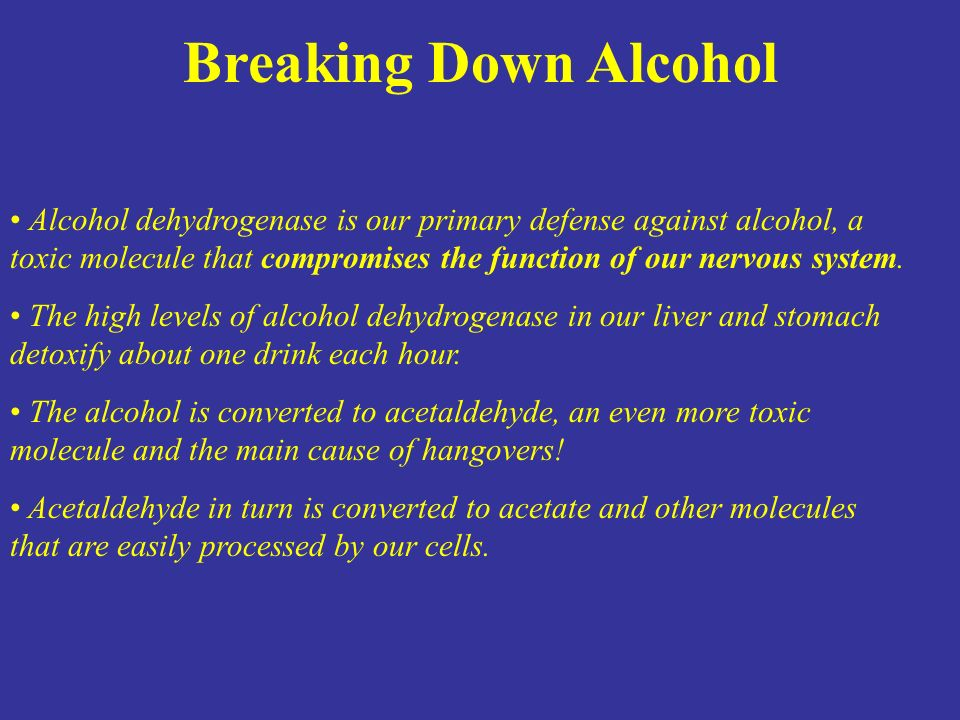 Alcohol dehydrogenase is our primary defense against alcohol, a toxic molecule that compromises the function of our nervous system. The high levels of