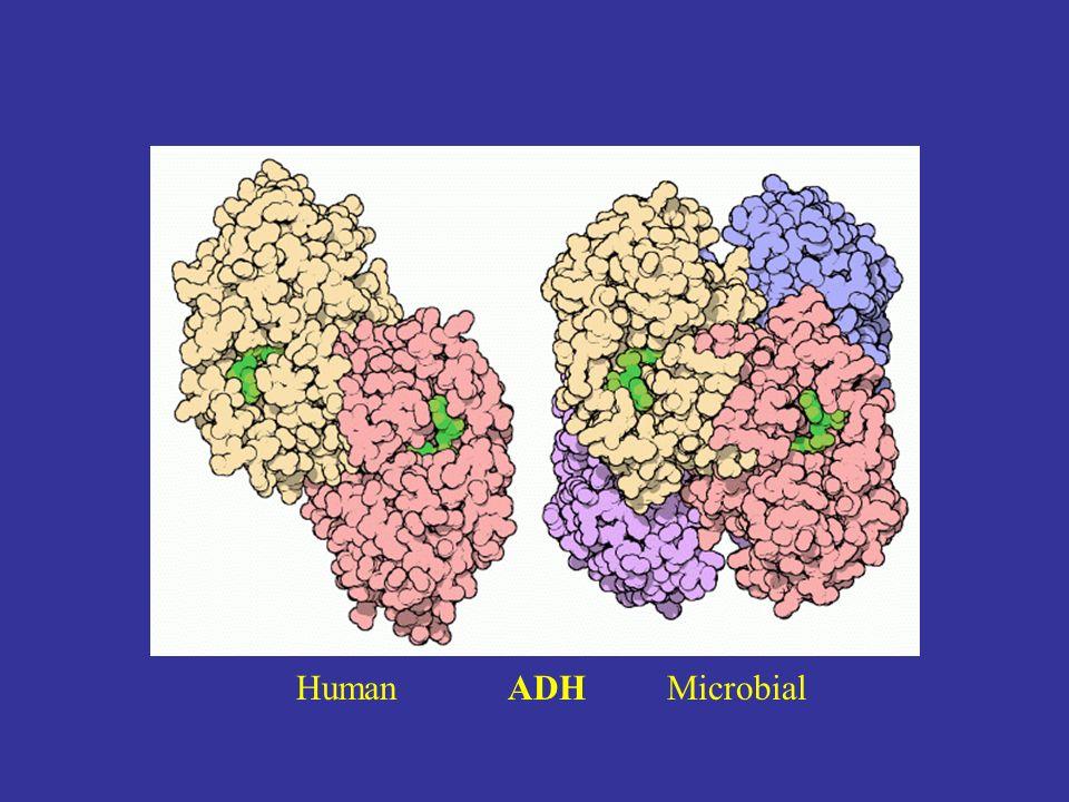 Human ADH Microbial