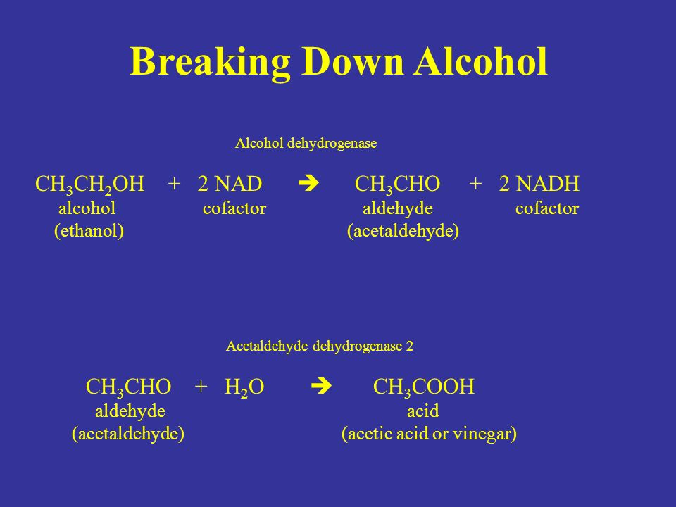 Breaking Down Alcohol Alcohol dehydrogenase CH 3 CH 2 OH + 2 NAD  CH 3 CHO + 2 NADH alcohol cofactor aldehyde cofactor (ethanol) (acetaldehyde) Acetaldehyde dehydrogenase 2 CH 3 CHO + H 2 O  CH 3 COOH aldehyde acid (acetaldehyde) (acetic acid or vinegar)