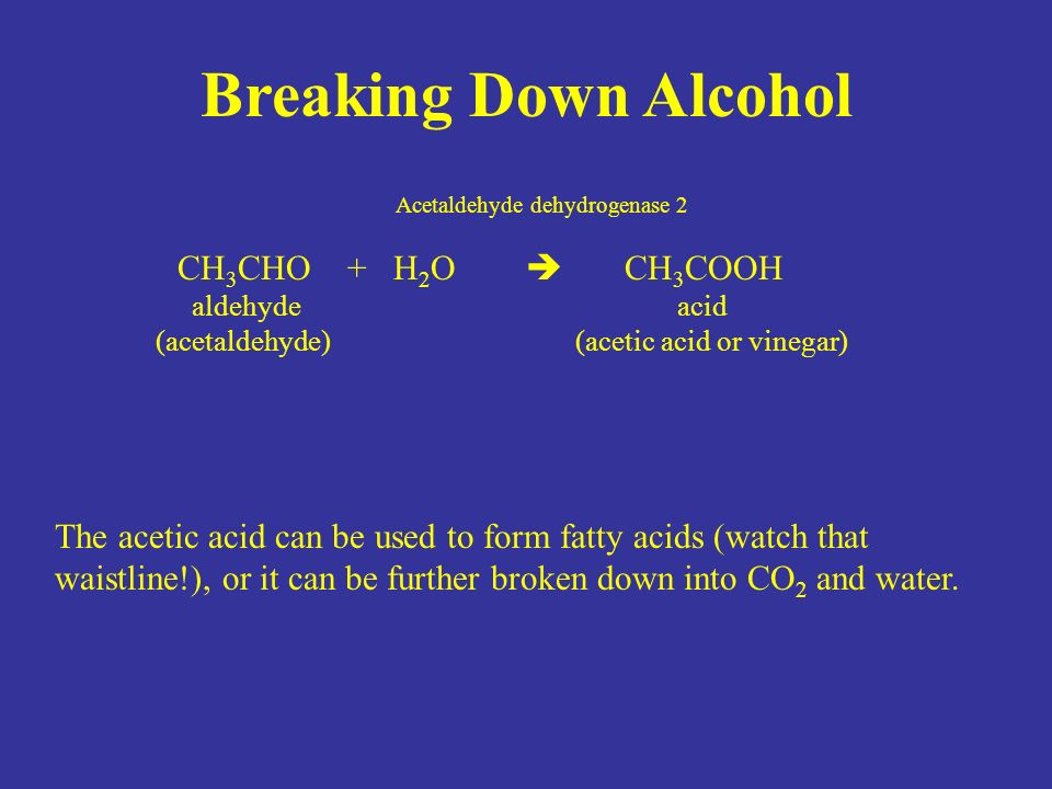 Breaking Down Alcohol Acetaldehyde dehydrogenase 2 CH 3 CHO + H 2 O  CH 3 COOH aldehyde acid (acetaldehyde) (acetic acid or vinegar) The acetic acid can be used to form fatty acids (watch that waistline!), or it can be further broken down into CO 2 and water.