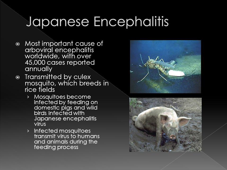  1800s – recognized in Japan  1924 – Japan epidemic.