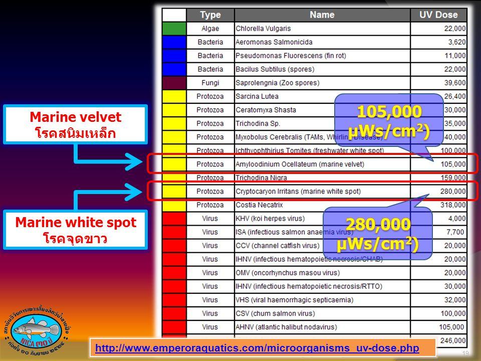 Marine velvet โรคสนิมเหล็ก Marine white spot โรคจุดขาว 19 http://www.emperoraquatics.com/microorganisms_uv-dose.php