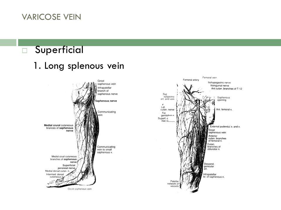 2.Short splenous vein VARICOSE VEIN