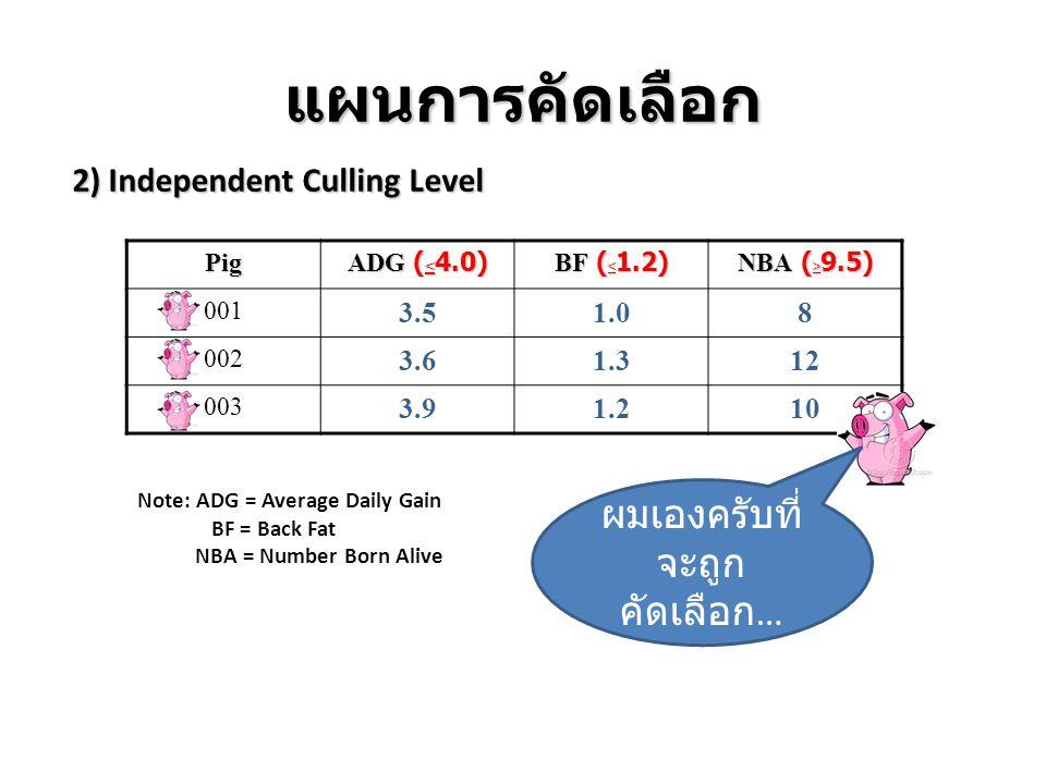 แผนการคัดเลือก 2) Independent Culling Level Pig ADG ( < 4.0) BF ( < 1.2) NBA ( > 9.5) 001 3.51.08 002 3.61.312 003 3.91.210 Note: ADG = Average Daily