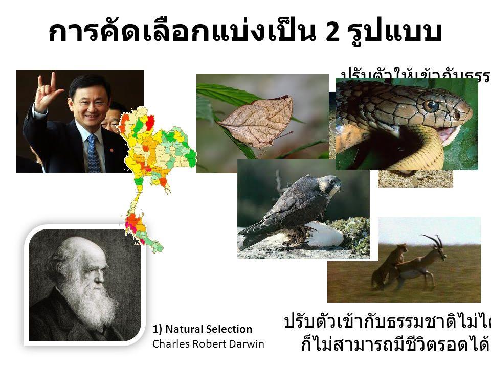 การคัดเลือกแบ่งเป็น 2 รูปแบบ 1) Natural Selection Charles Robert Darwin ปรับตัวให้เข้ากับธรรมชาติ ปรับตัวเข้ากับธรรมชาติไม่ได้ ก็ไม่สามารถมีชีวิตรอดได
