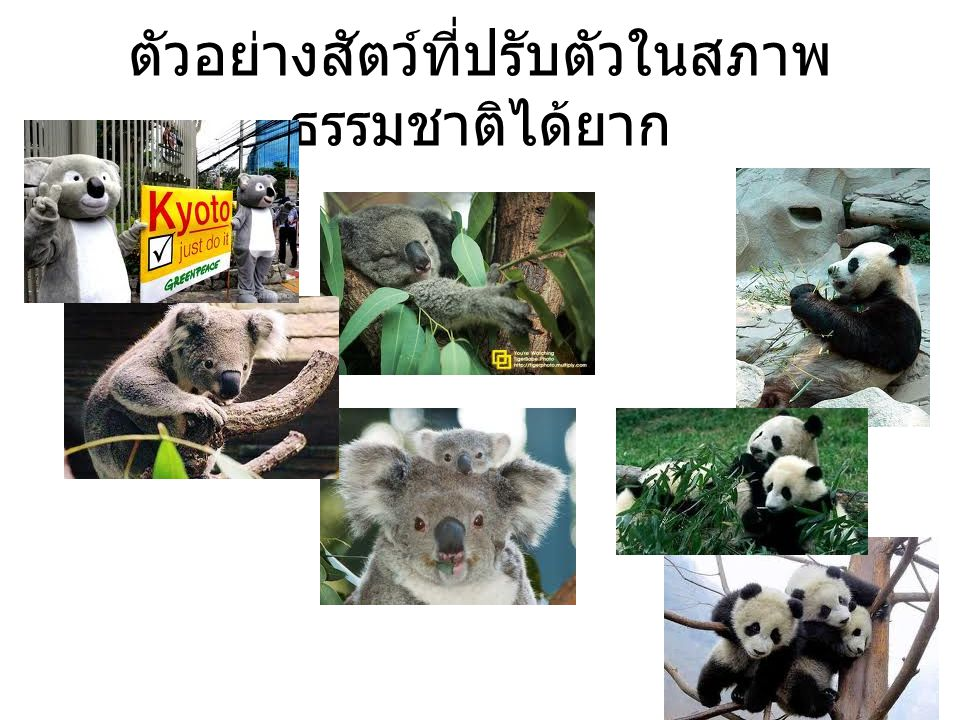 Natural selection ยังรวมถึงทฤษฏี used and disused Use and disuse Jean-Baptiste Lamarck