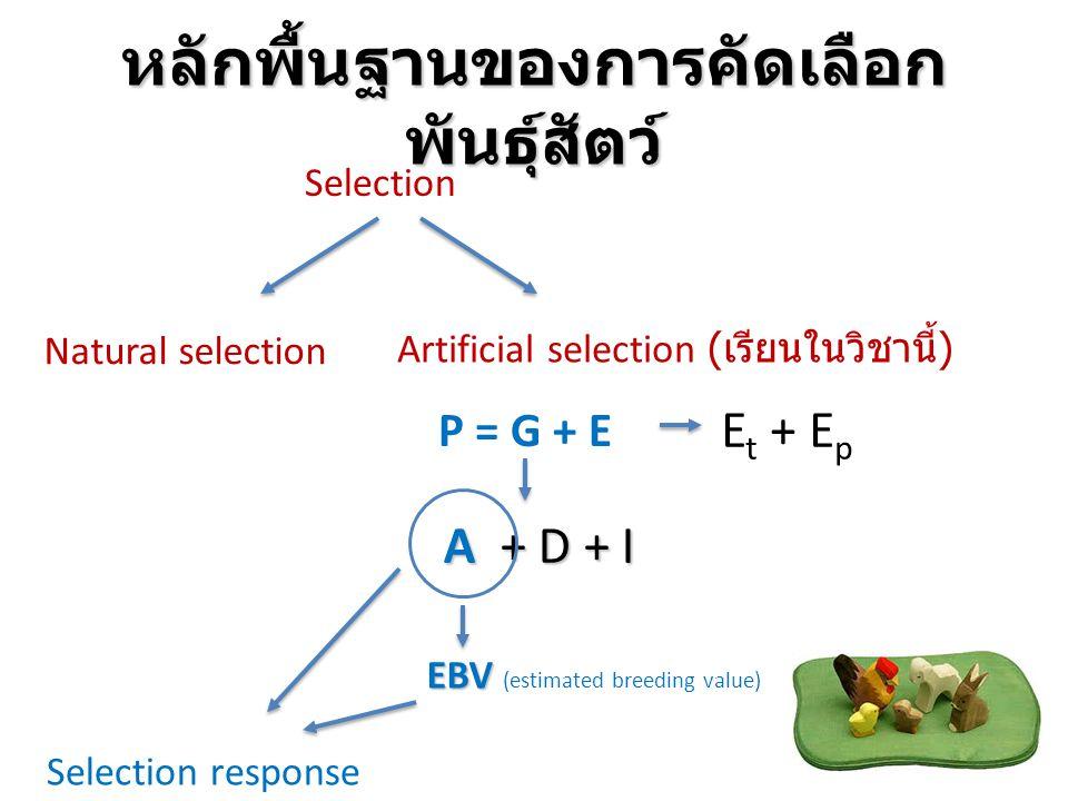 หลักพื้นฐานของการคัดเลือก พันธุ์สัตว์ Selection Natural selection Artificial selection ( เรียนในวิชานี้ ) P = G + E A + D + I E t + E p EBV EBV (estim