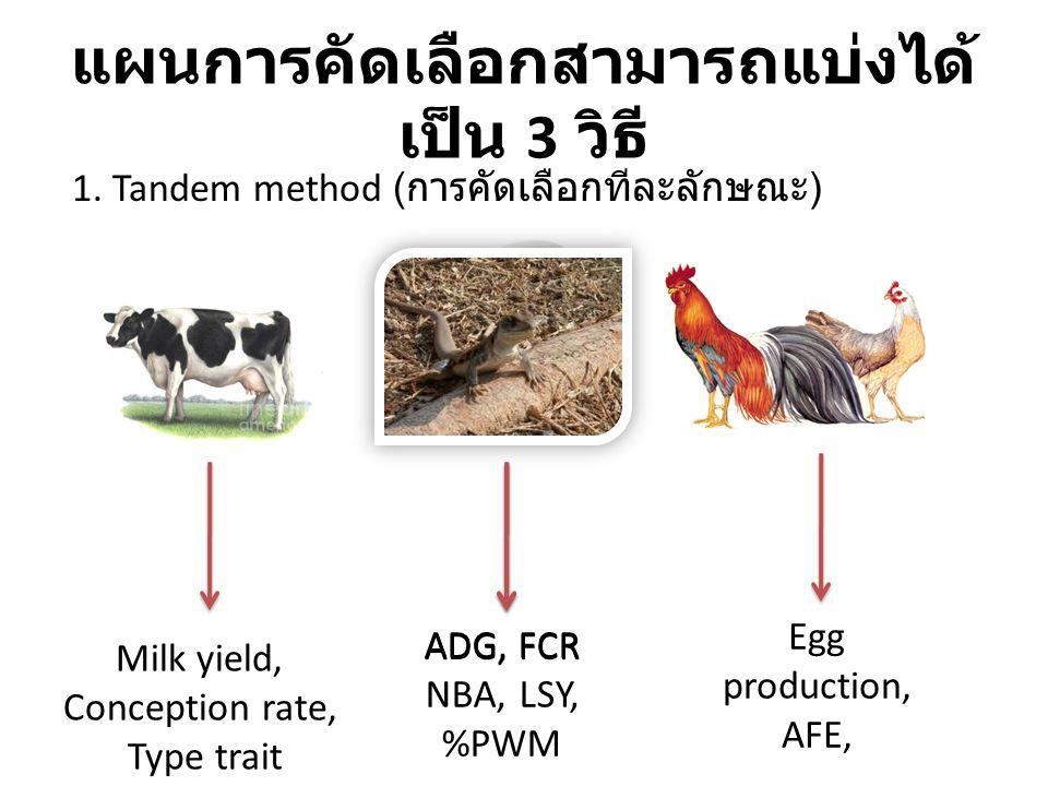 แผนการคัดเลือกสามารถแบ่งได้ เป็น 3 วิธี Milk yield, Conception rate, Type trait ADG, FCR NBA, LSY, %PWM Egg production, AFE, 1. Tandem method ( การคัด