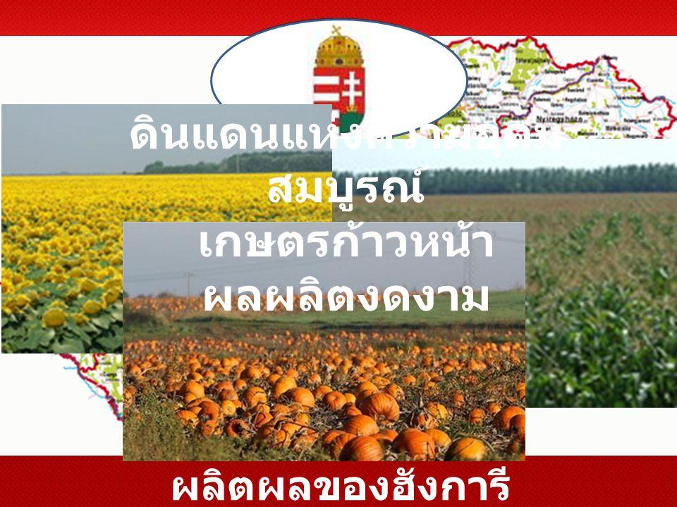 ผลิตผลของฮังการี ดินแดนแห่งความอุดม สมบูรณ์ เกษตรก้าวหน้า ผลผลิตงดงาม