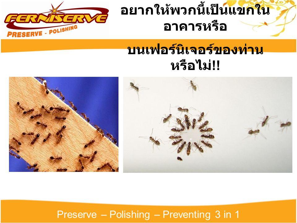 Preserve – Polishing – Preventing 3 in 1 อยากให้พวกนี้ไปอยู่ร่วมกับ แขกในโรงแรมรึ !!