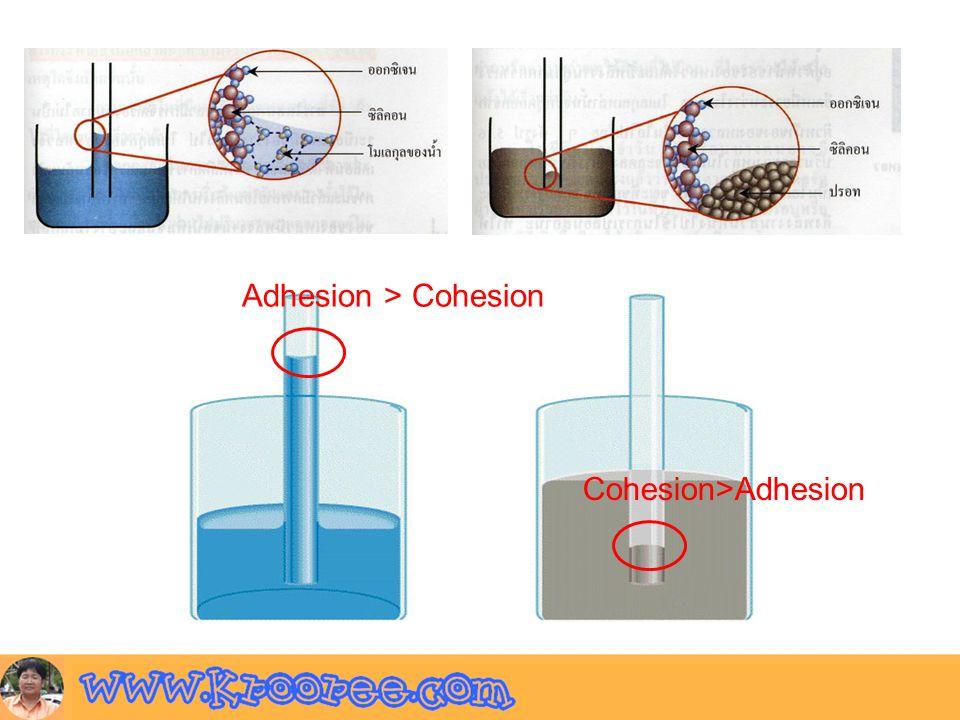 Adhesion > Cohesion Cohesion>Adhesion