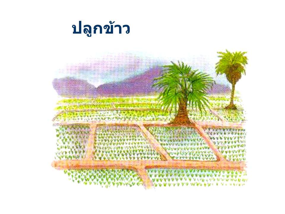 พื้นที่ประมาณ 30% ให้ขุดสระเก็บ กักน้ำ เพื่อให้มีน้ำใช้สม่ำเสมอตลอดปี โดยเก็บกักน้ำฝนในฤดูฝน และใช้เสริม การปลูกพืชในฤดูแล้ง หรือระยะฝนทิ้งช่วง ตลอดจน