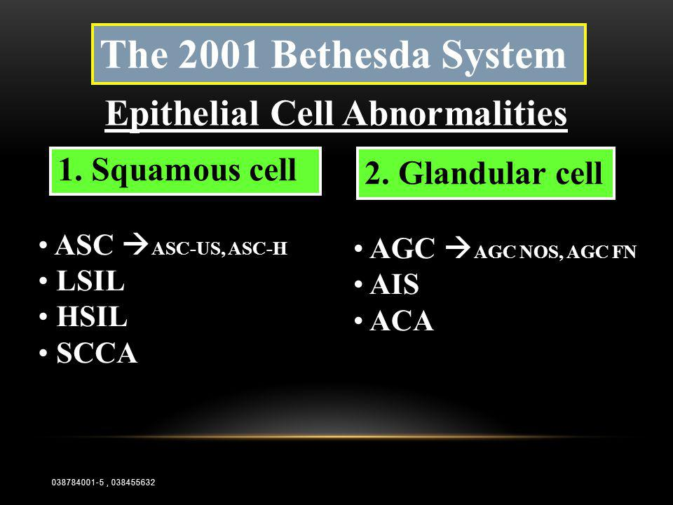 The 2001 Bethesda System Epithelial Cell Abnormalities • AGC  AGC NOS, AGC FN • AIS • ACA • ASC  ASC-US, ASC-H • LSIL • HSIL • SCCA 2. Glandular cel