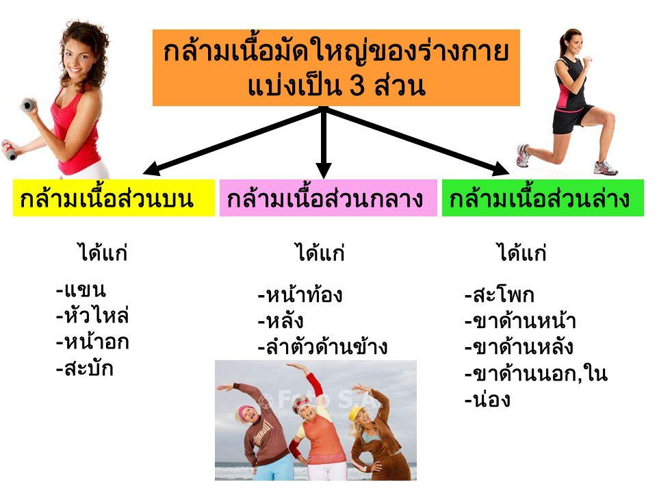 กล้ามเนื้อส่วนล่างกล้ามเนื้อส่วนบนกล้ามเนื้อส่วนกลาง -แขน -หัวไหล่ -หน้าอก -สะบัก ได้แก่ -หน้าท้อง -หลัง -ลำตัวด้านข้าง -สะโพก -ขาด้านหน้า -ขาด้านหลัง