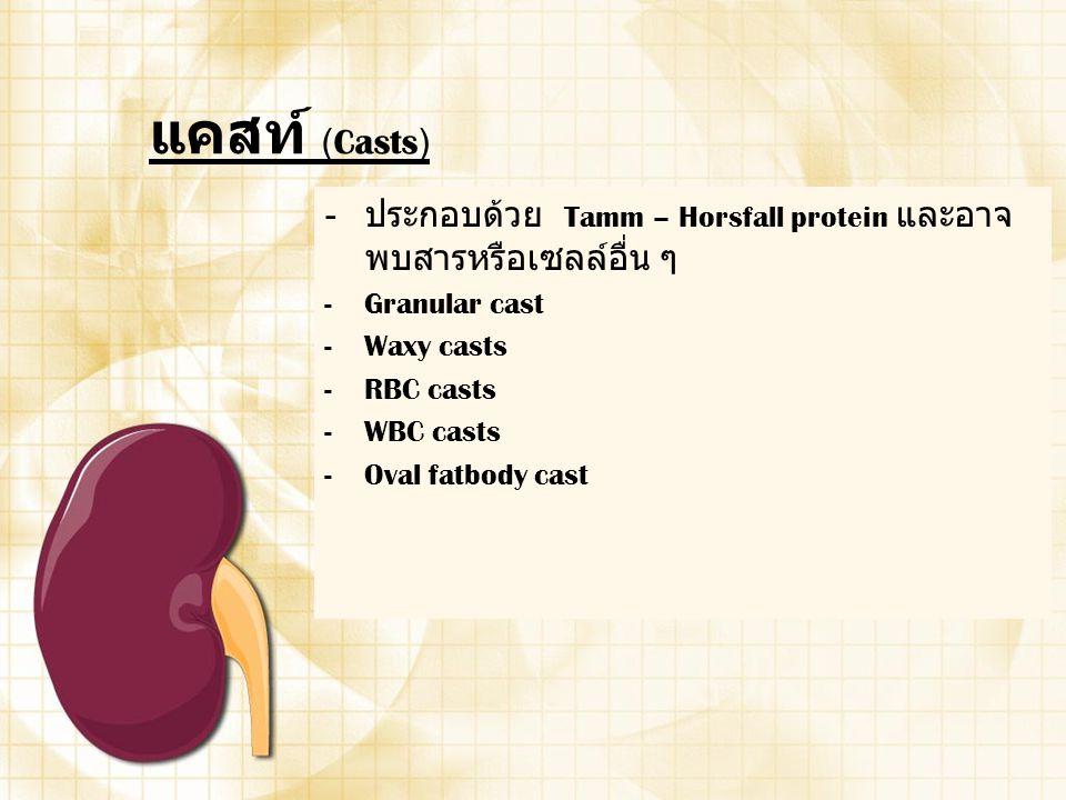แคสท์ (Casts) - ประกอบด้วย Tamm – Horsfall protein และอาจ พบสารหรือเซลล์อื่น ๆ -Granular cast -Waxy casts -RBC casts -WBC casts -Oval fatbody cast