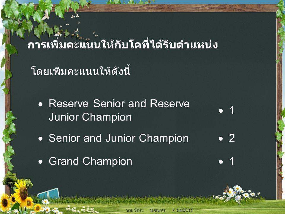  Reserve Senior and Reserve Junior Champion 11  Senior and Junior Champion 22  Grand Champion 11 การเพิ่มคะแนนให้กับโคที่ได้รับตำแหน่ง โดยเพิ่มคะแนนให้ดังนี้