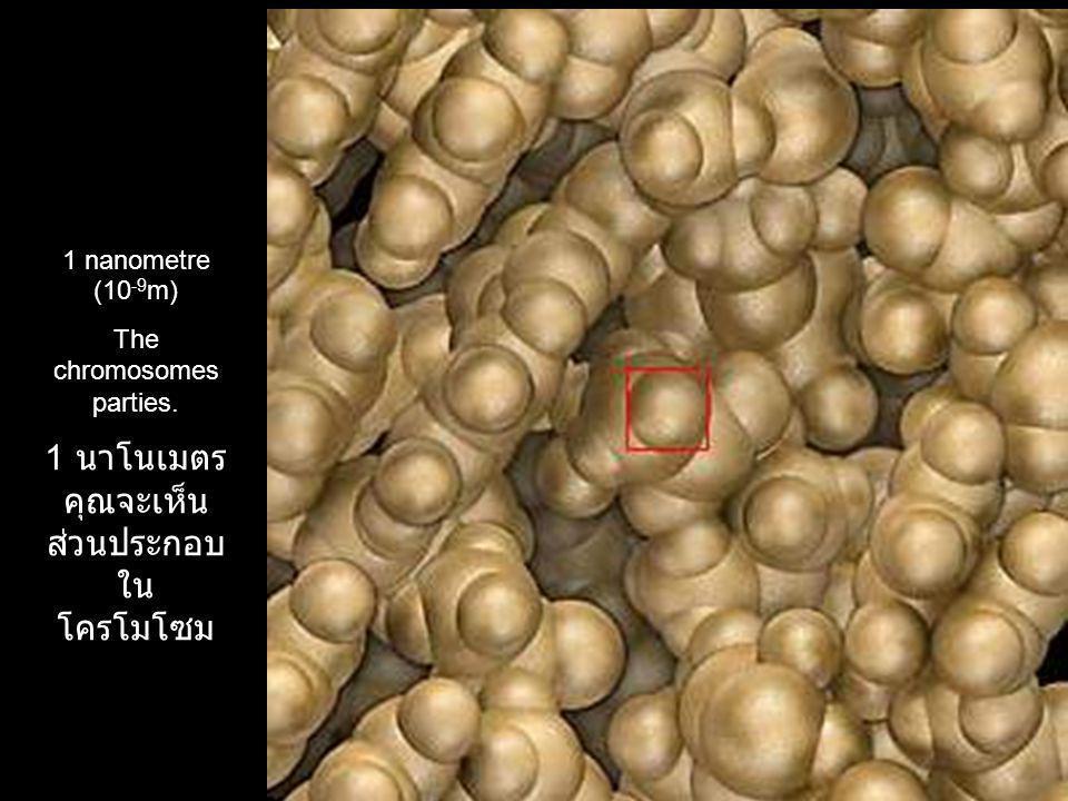 1 nanometre (10 -9 m) The chromosomes parties. 1 นาโนเมตร คุณจะเห็น ส่วนประกอบ ใน โครโมโซม