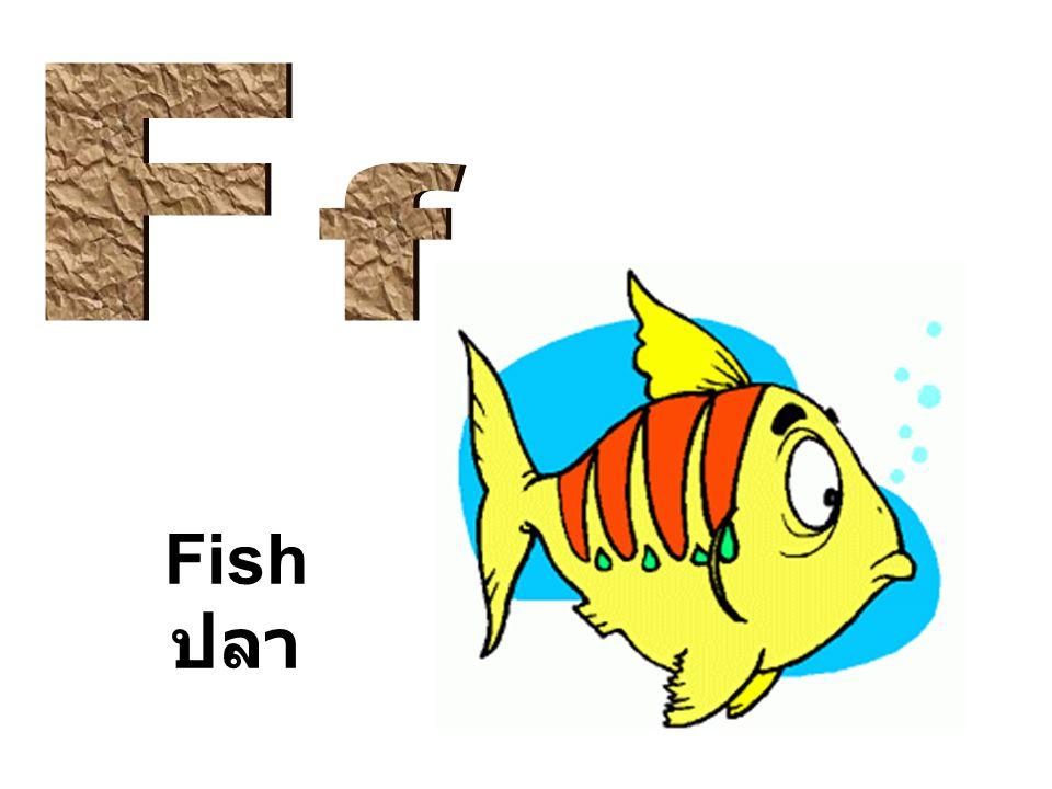 Fish ปลา
