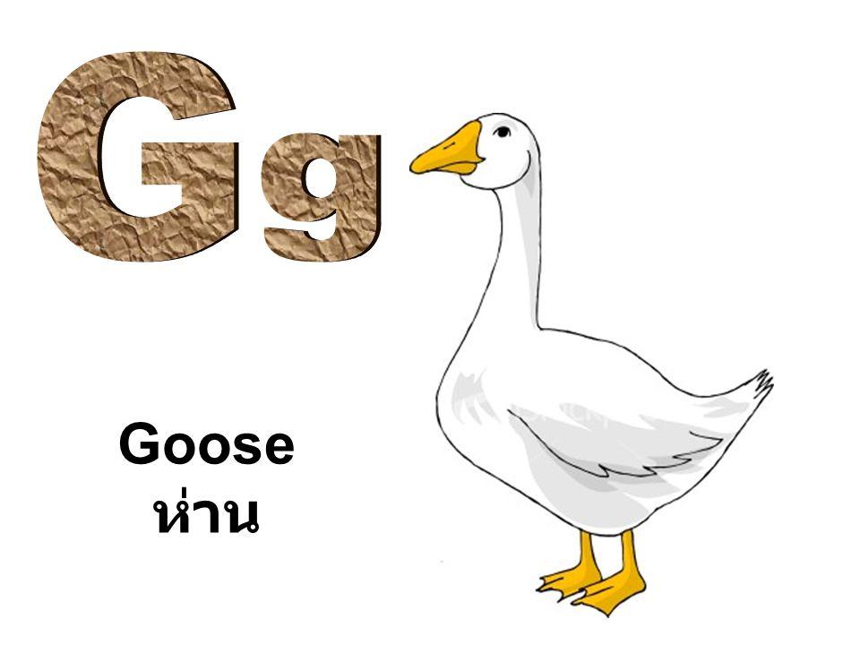 Goose ห่าน