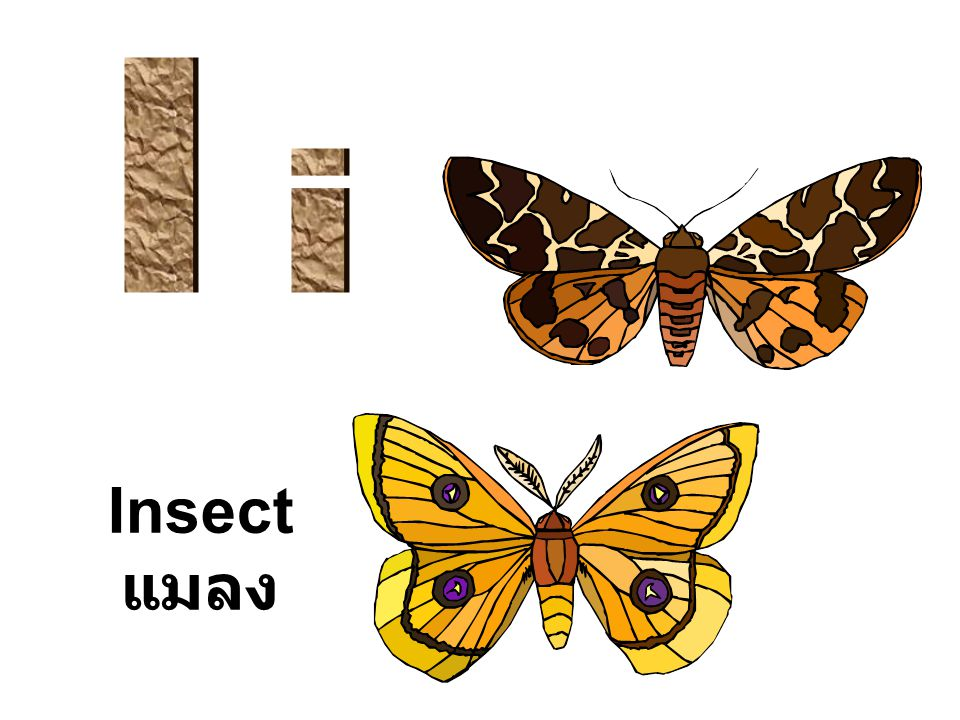 Insect แมลง
