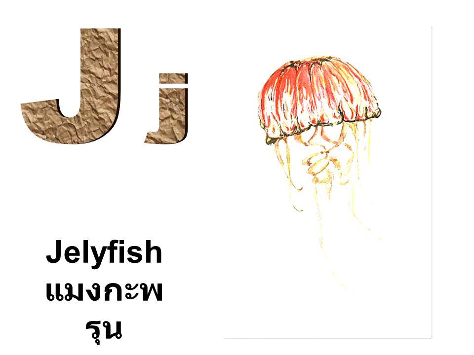 Jelyfish แมงกะพ รุน
