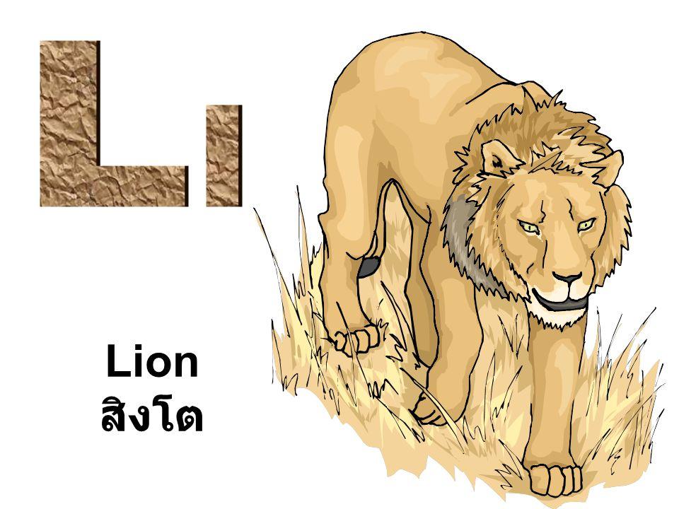 Lion สิงโต