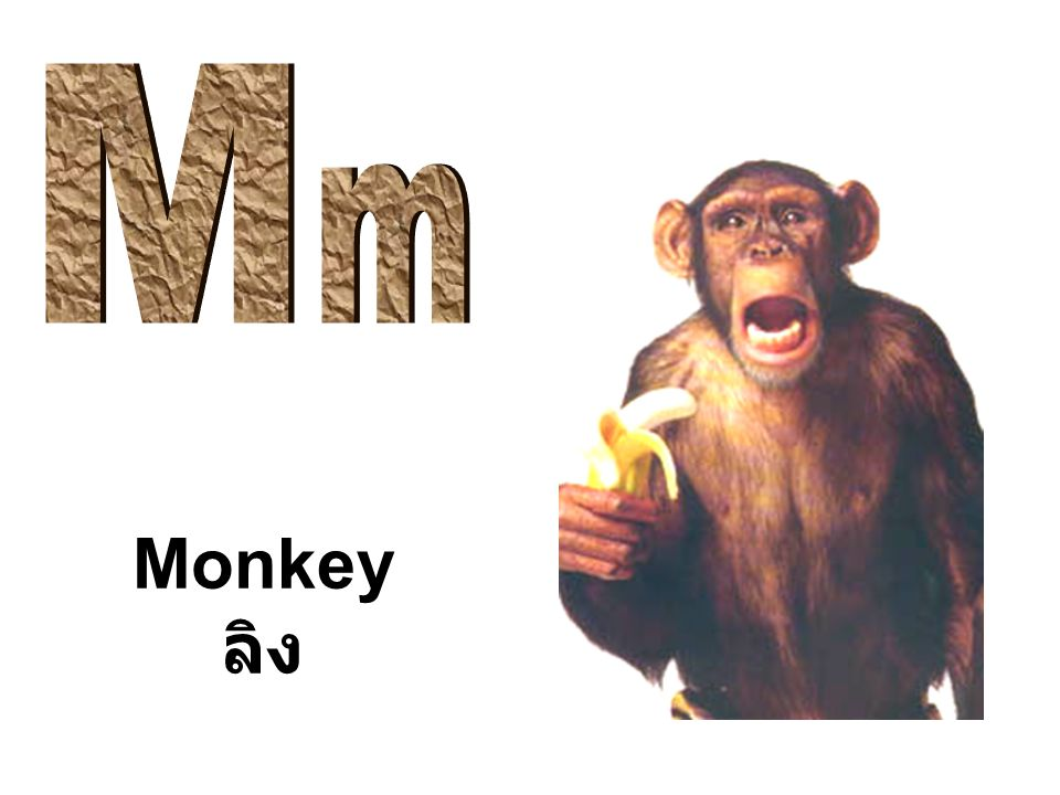 Monkey ลิง