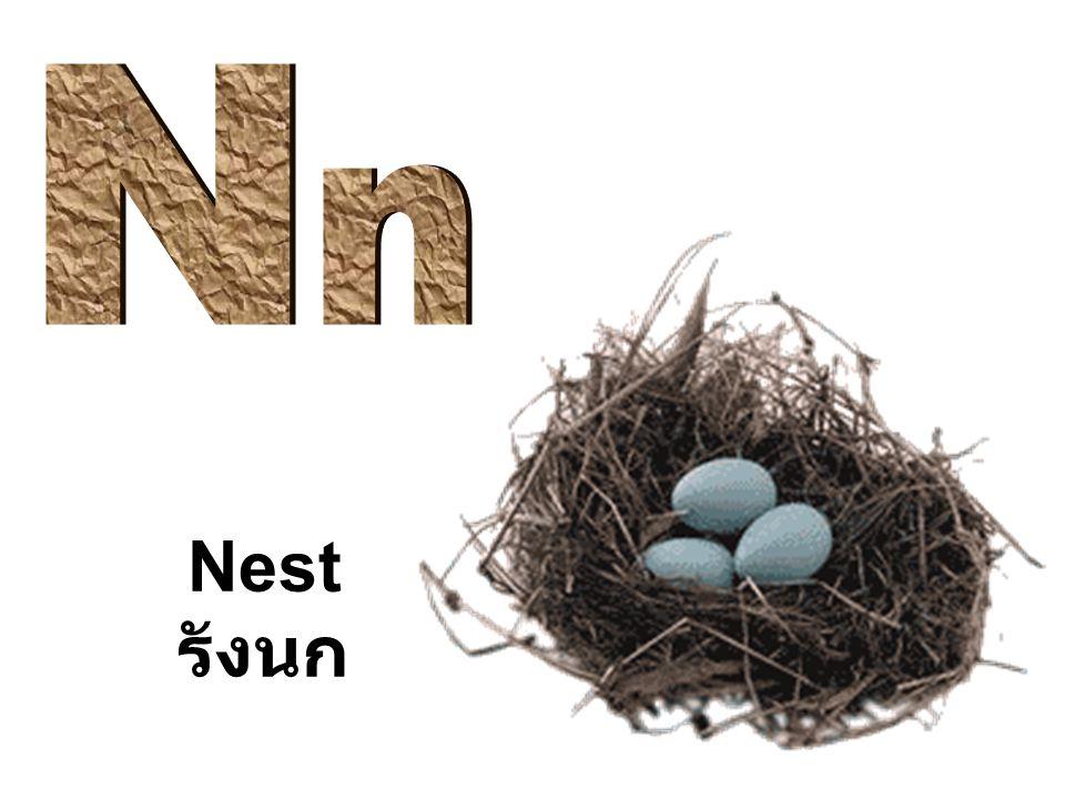 Nest รังนก