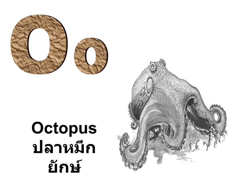 Octopus ปลาหมึก ยักษ์
