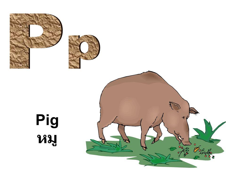 Pig หมู