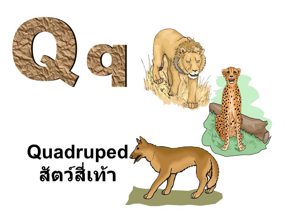 Quadruped สัตว์สี่เท้า