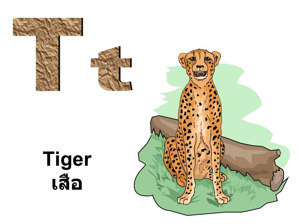 Tiger เสือ