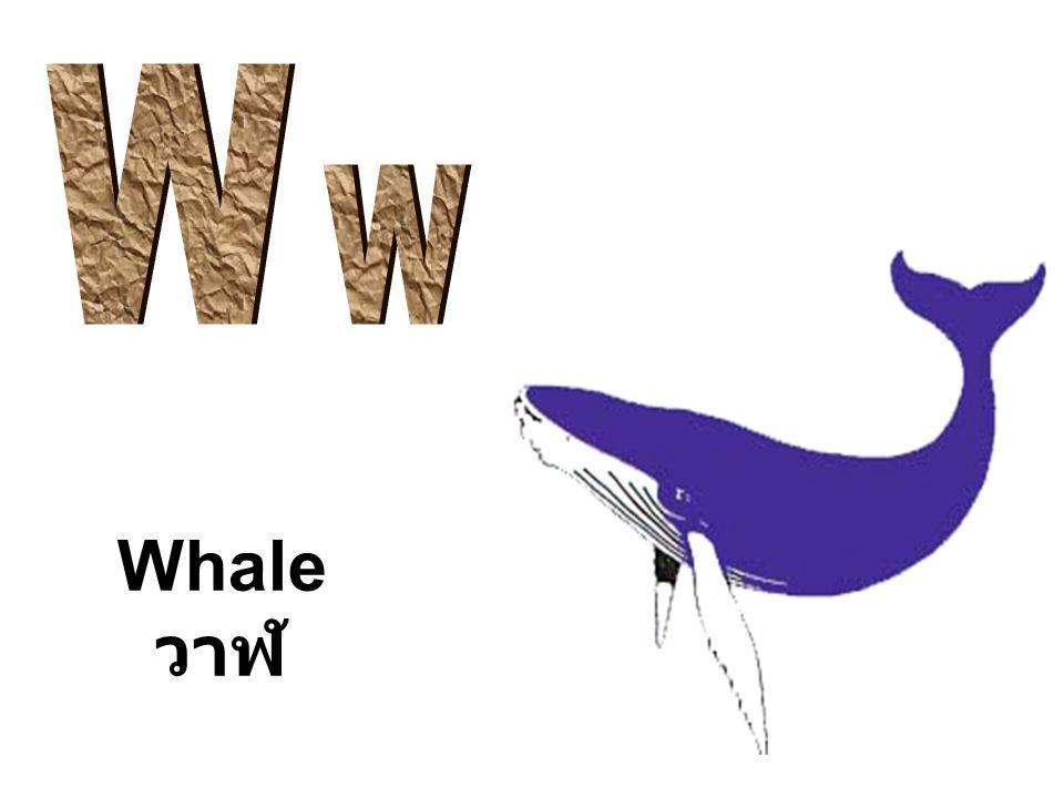 Whale วาฬ